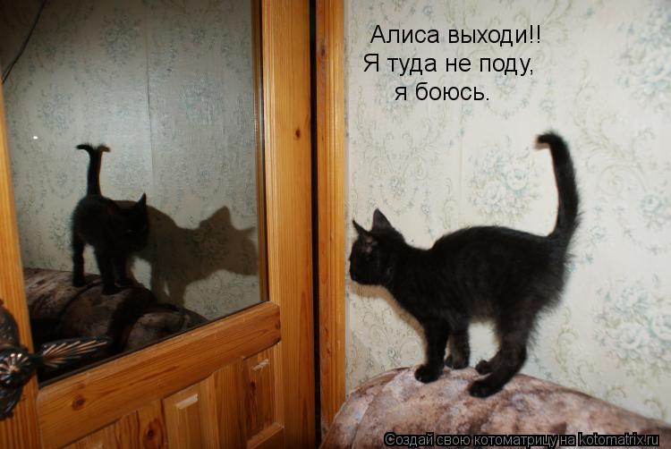 Котоматрица: Алиса выходи!! Я туда не поду, я боюсь.