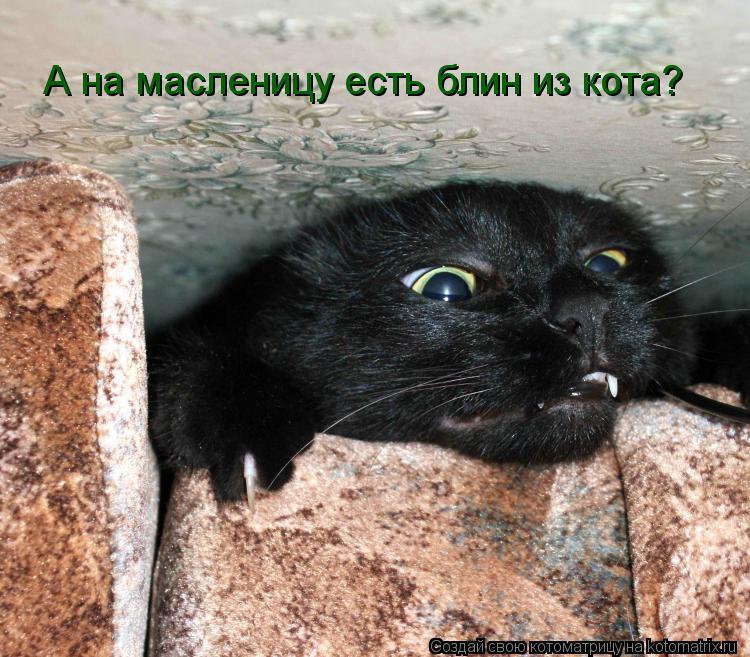 Котоматрица: А на масленицу есть блин из кота?
