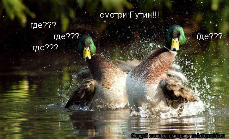 Котоматрица: смотри Путин!!! где??? где??? где??? где???