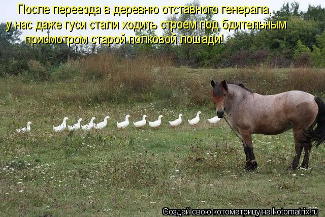 Котоматрица: После переезда в деревню отставного генерала, у нас даже гуси стали ходить строем под бдительным присмотром старой полковой лошади!
