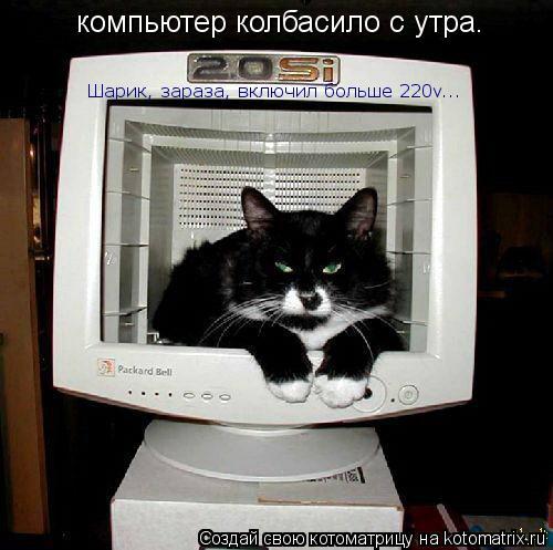 Котоматрица: компьютер колбасило с утра. Шарик, зараза, включил больше 220v...