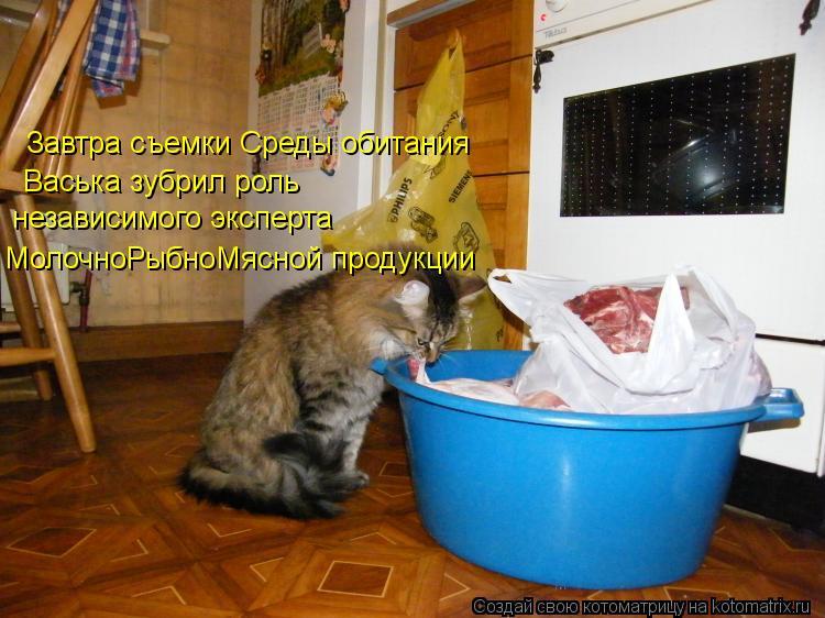 Котоматрица: Завтра съемки Среды обитания Васька зубрил роль независимого эксперта  МолочноРыбноМясной продукции