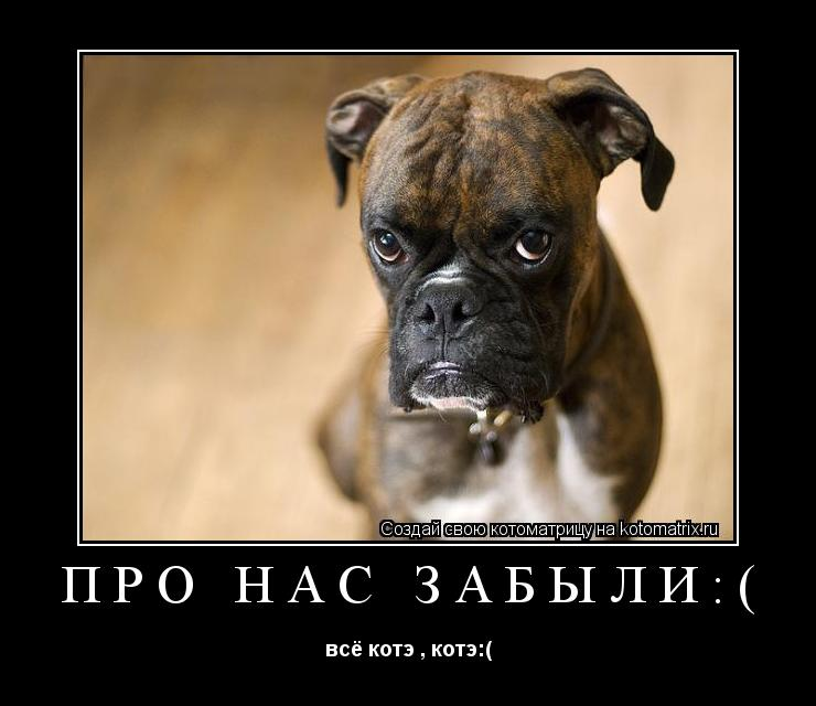 Котоматрица: про нас забыли:( всё котэ , котэ:(