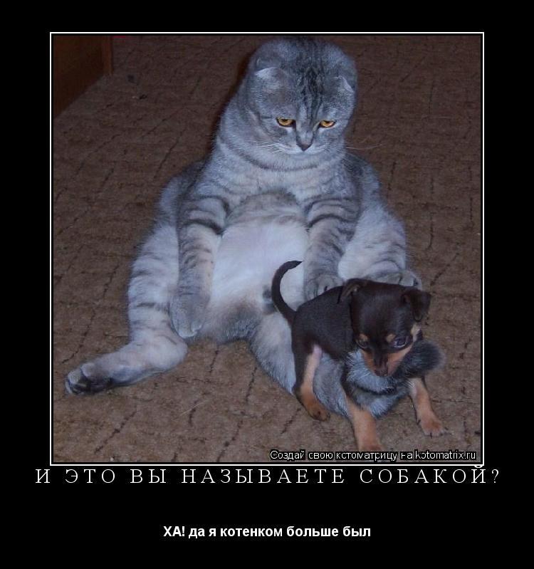 Котоматрица: и ЭТО вы называете собакой? ХА! да я котенком больше был