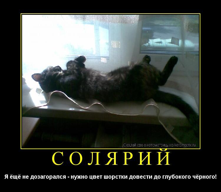 Котоматрица: Солярий Я ёщё не дозагорался - нужно цвет шорстки довести до глубокого чёрного!