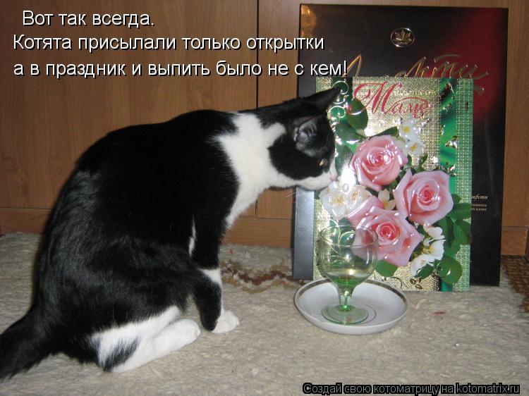 Котоматрица: Вот так всегда. Котята присылали только открытки а в праздник и выпить было не с кем!
