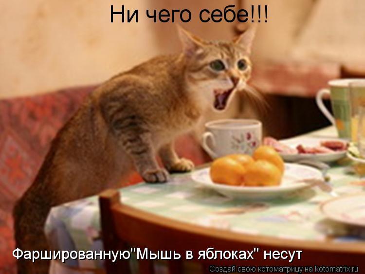 """Котоматрица: Ни чего себе!!! Фаршированную""""Мышь в яблоках"""" несут"""