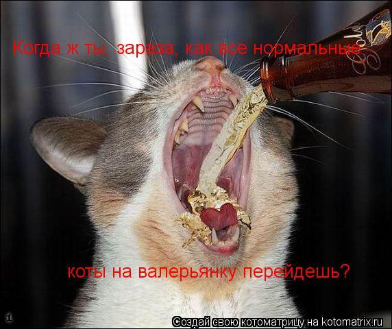 Котоматрица: Когда ж ты, зараза, как все нормальные  коты на валерьянку перейдешь?