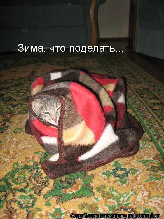 Котоматрица: Зима, что поделать...