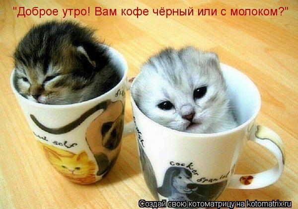 """Котоматрица: """"Доброе утро! Вам кофе чёрный или с молоком?"""""""