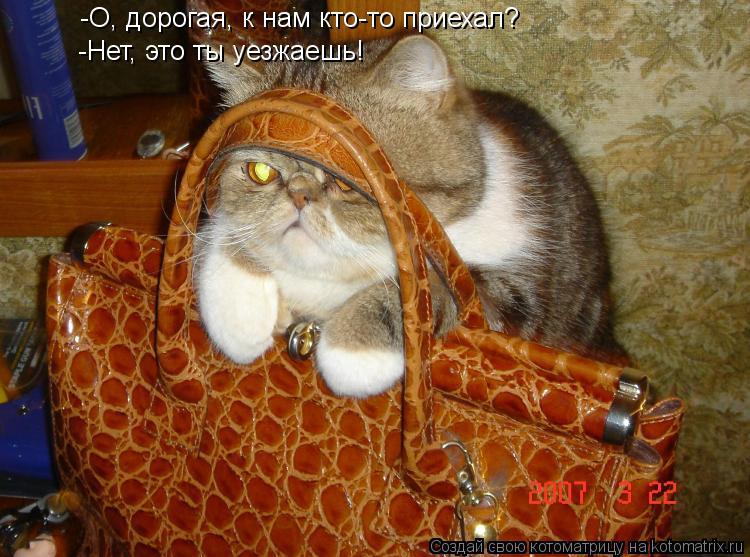 Котоматрица: -О, дорогая, к нам кто-то приехал? -Нет, это ты уезжаешь!