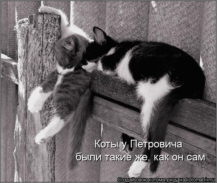 Котоматрица: Коты у Петровича были такие же, как он сам