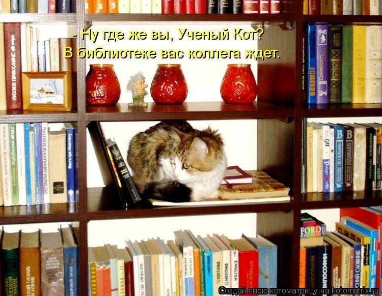 Котоматрица: В библиотеке вас коллега ждет. - Ну где же вы, Ученый Кот?