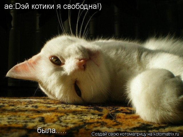 Котоматрица: ае:Dэй котики я свободна!) была.....