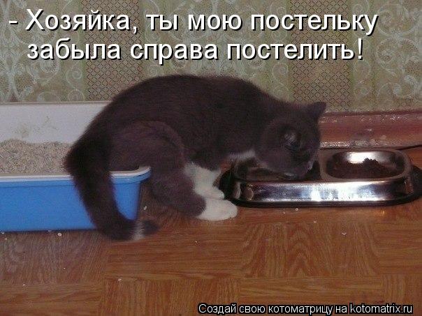 Котоматрица: - Хозяйка, ты мою постельку  забыла справа постелить!
