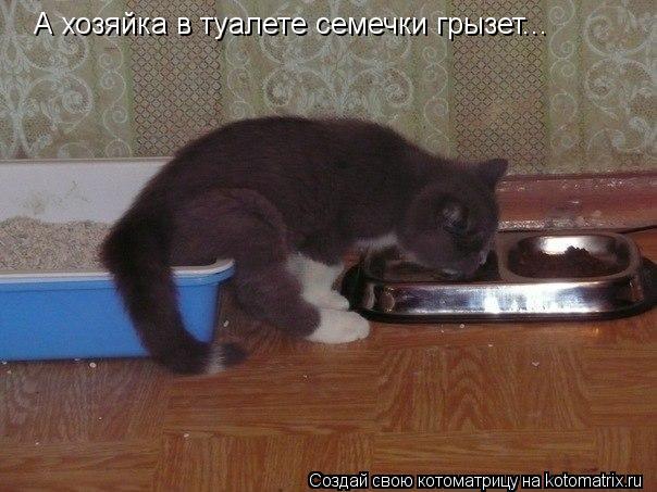 Котоматрица: А хозяйка в туалете семечки грызет...