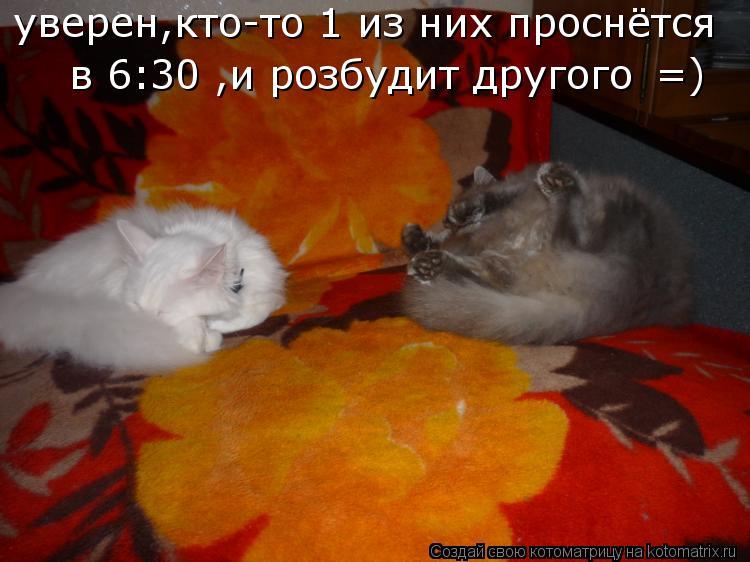 Котоматрица: уверен,кто-то 1 из них проснётся  в 6:30 ,и розбудит другого  =)
