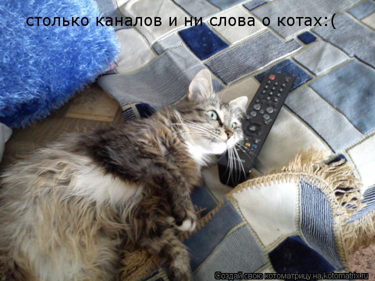 Котоматрица: столько каналов и ни слова о котах:(