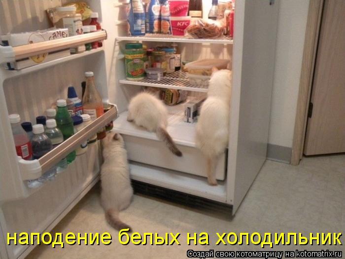Котоматрица: наподение белых на холодильник