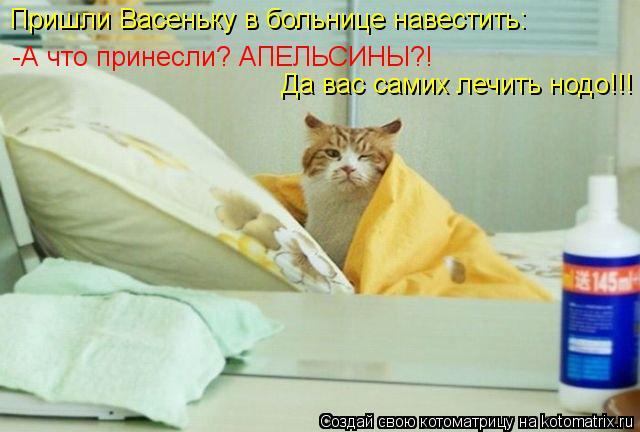 Котоматрица: Пришли Васеньку в больнице навестить: -А что принесли? АПЕЛЬСИНЫ?!   Да вас самих лечить нодо!!!