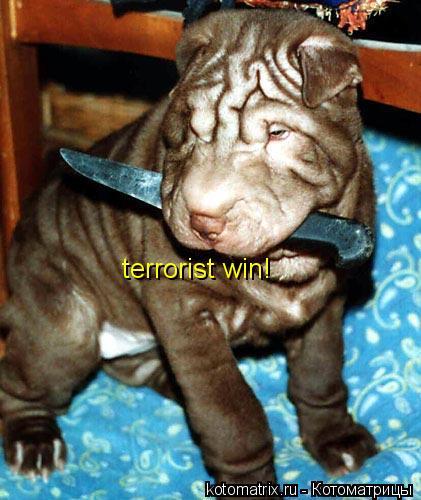Котоматрица: terrorist win!