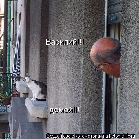 Котоматрица: Василий!!! домой!!!