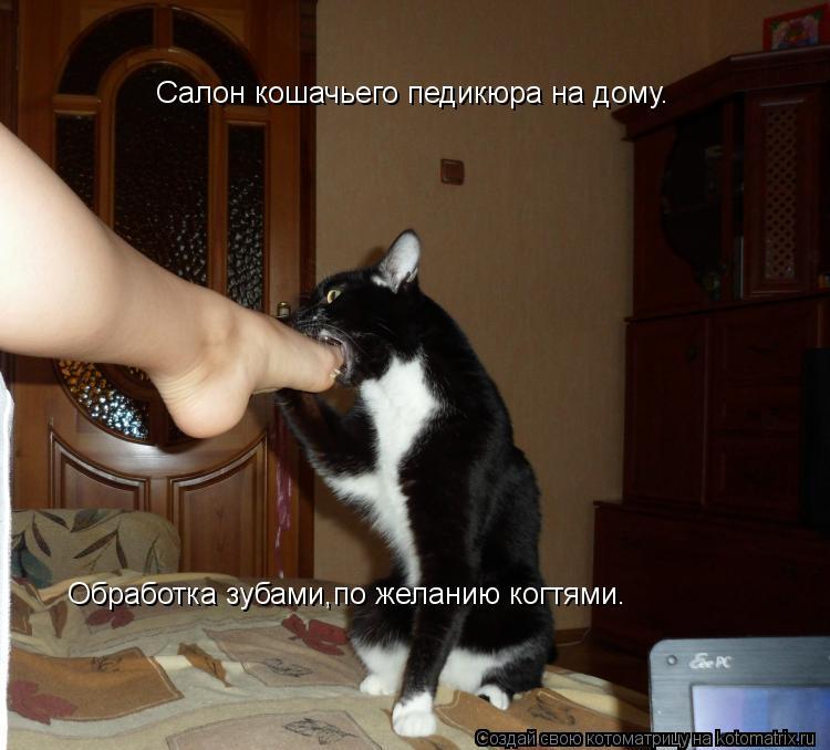 Котоматрица: Салон кошачьего педикюра на дому. Обработка зубами,по желанию когтями.