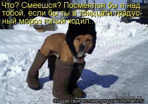 Котоматрица: Что? Смеешся? Посмеялся бы я над  тобой, если бы ты в тридцати градус- ный мороз голый ходил...