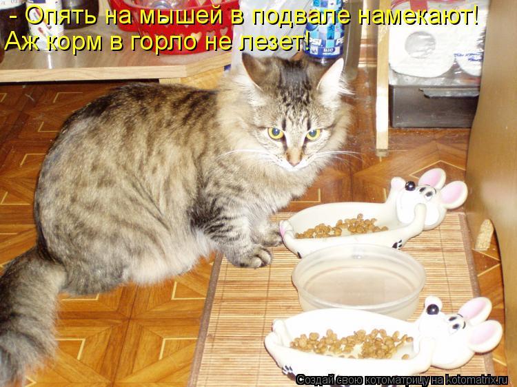 Котоматрица: - Опять на мышей в подвале намекают! Аж корм в горло не лезет!