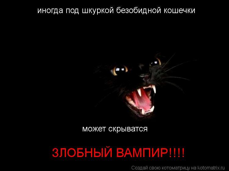 Котоматрица: иногда под шкуркой безобидной кошечки может скрыватся  ЗЛОБНЫЙ ВАМПИР!!!!