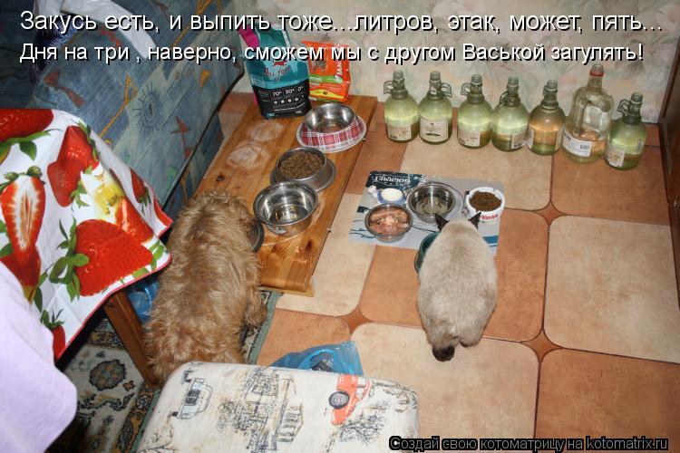Котоматрица: Закусь есть, и выпить тоже...литров, этак, может, пять... Дня на три , наверно, сможем мы с другом Васькой загулять!