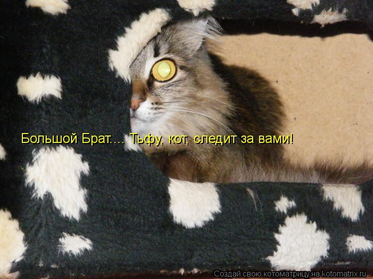 Котоматрица: Большой Брат.... Тьфу, кот, следит за вами!