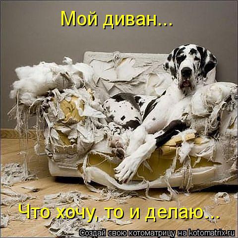 Котоматрица: Что хочу, то и делаю... Мой диван...