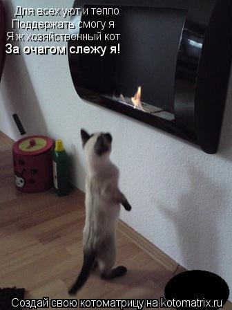 Котоматрица: Для всех уют и тепло Поддержать смогу я Я ж хозяйственный кот За очагом слежу я!