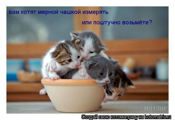 Котоматрица: вам котят мерной чашкой измерять или поштучно возьмёте?