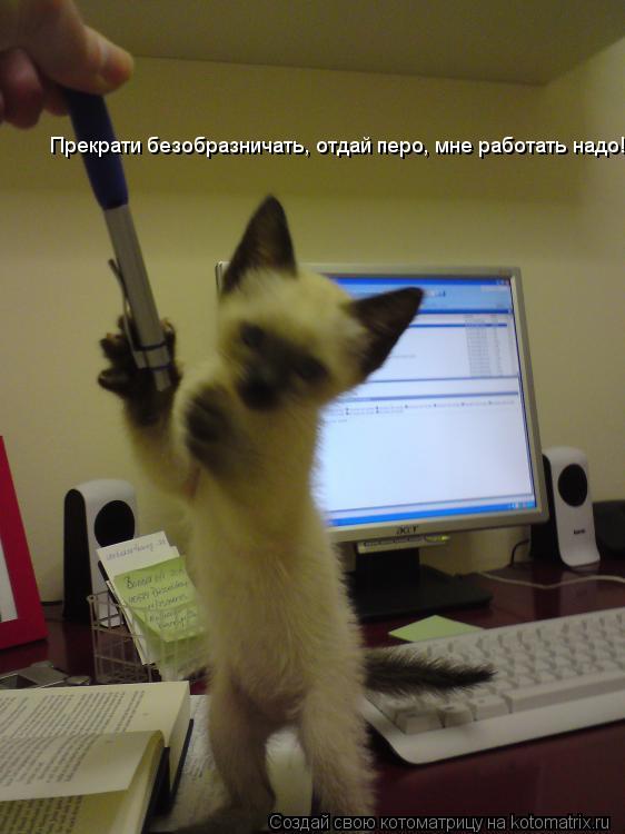 Котоматрица: Прекрати безобразничать, отдай перо, мне работать надо!