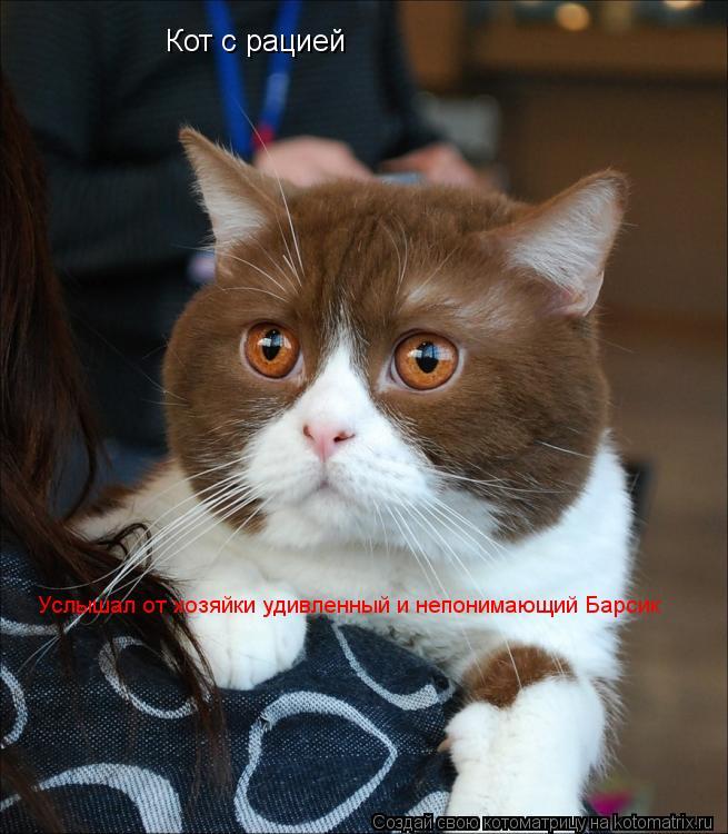 Котоматрица: Кот с рацией Услышал от хозяйки удивленный и непонимающий Барсик