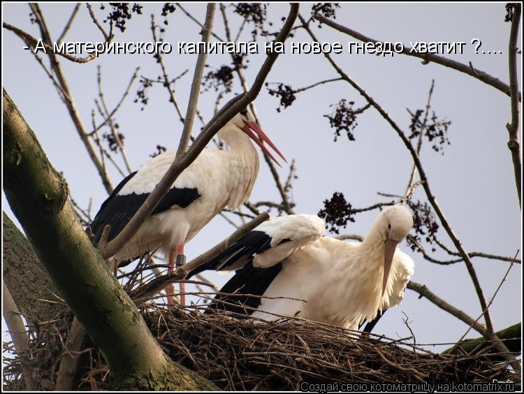 Котоматрица: - А материнского капитала на новое гнездо хватит ?....