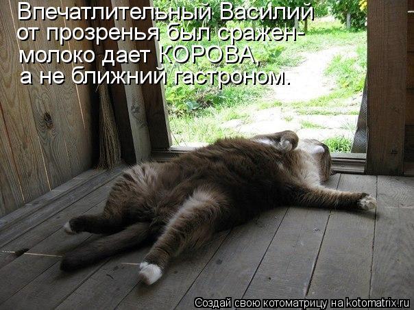 Котоматрица: Впечатлительный Василий  от прозренья был сражен- молоко дает КОРОВА, а не ближний гастроном.