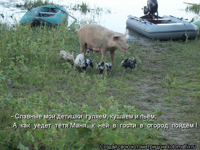 Котоматрица: ...А  как  уедет  тётя Маня,  к  ней  в  гости  в  огород  пойдём !   - Славные мои детишки, гуляем, кушаем и пьём,