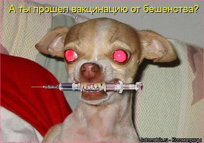Котоматрица: А ты прошел вакцинацию от бешенства?