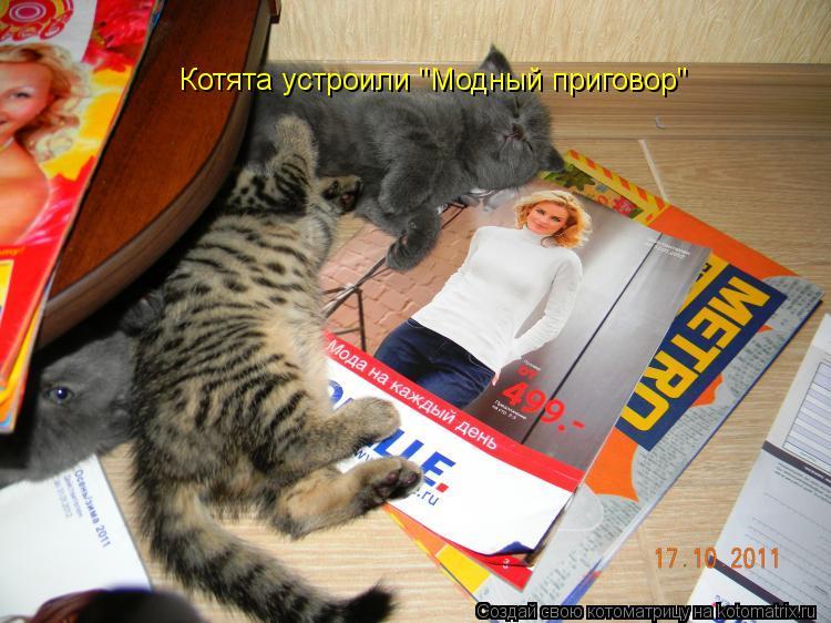 """Котоматрица: Котята устроили """"Модный приговор"""""""