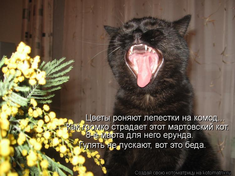 Котоматрица: Цветы роняют лепестки на комод... Как громко страдает этот мартовский кот. 8-е марта для него ерунда. Гулять не пускают, вот это беда.