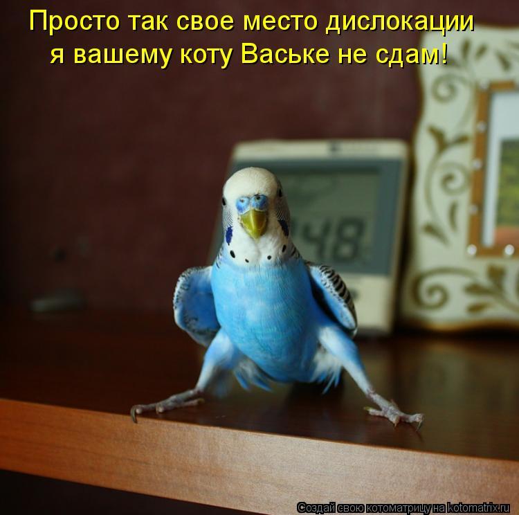 Котоматрица: я вашему коту Ваське не сдам! Просто так свое место дислокации