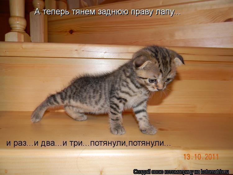 Котоматрица: А теперь тянем заднюю праву лапу... и раз...и два...и три...потянули,потянули...