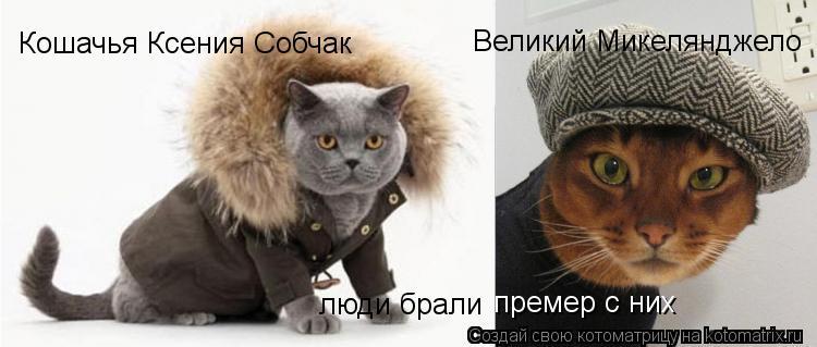 Котоматрица: Кошачья Ксения Собчак Великий Микелянджело люди брали  премер с них