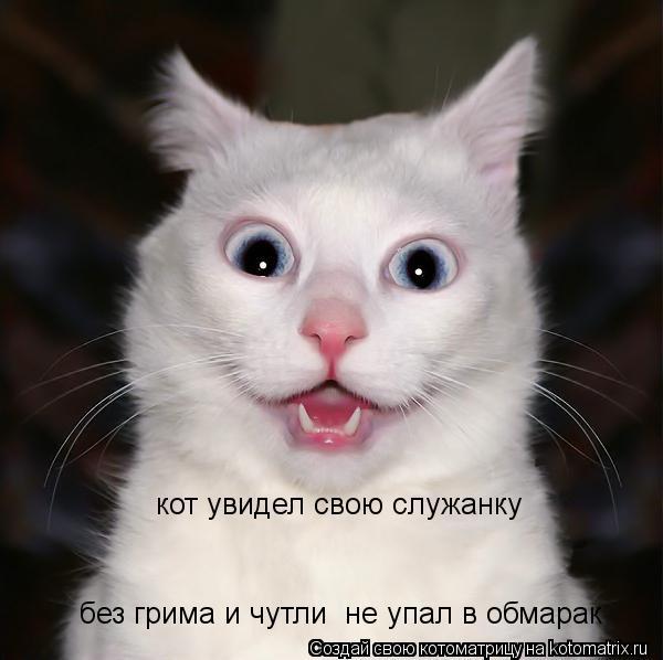 Котоматрица: кот увидел свою служанку  без грима и чутли  не упал в обмарак