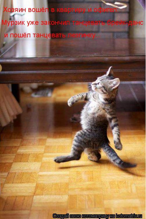 Котоматрица: Хозяин вошёл в квартиру и офигел: Мурзик уже закончил танцевать брейк-данс и пошёл танцевать лезгинку...