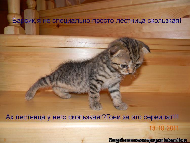 Котоматрица: Барсик,я не специально.просто,лестница скользкая! Ах лестница у него скользкая!?Гони за это сервилат!!!