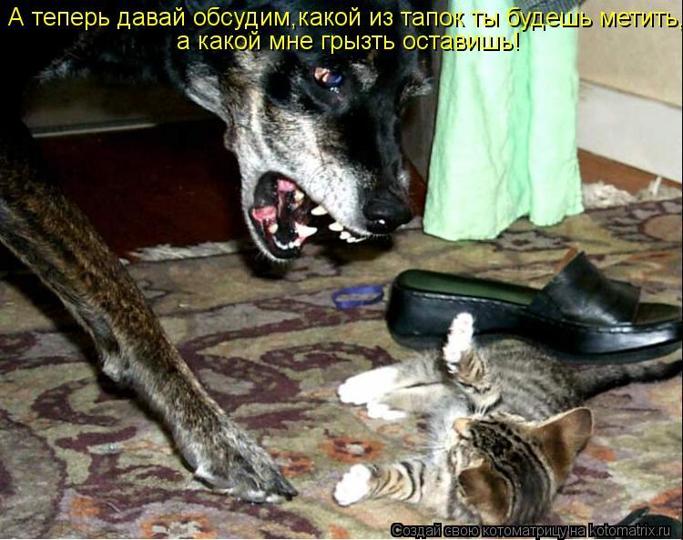 Котоматрица: А теперь давай обсудим,какой из тапок ты будешь метить, а какой мне грызть оставишь!